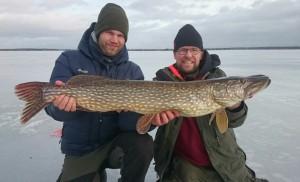 Grov gädda! Ismete & fiskeguidning med fiskeguide Mikael Puhakka www.fishguide.se